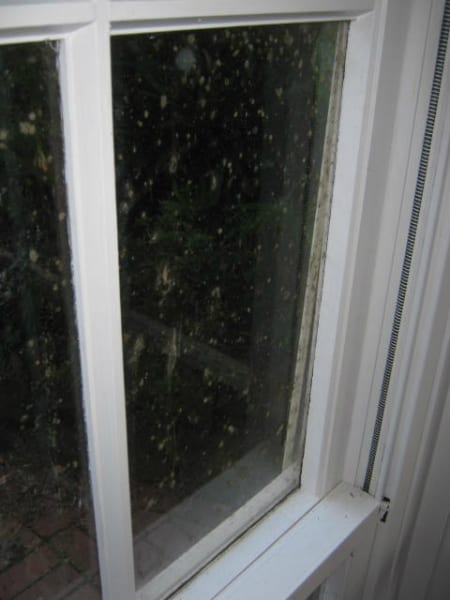Mould on Windows Removal